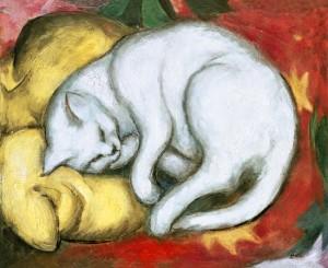 marc franz gatto su cuscino giallo